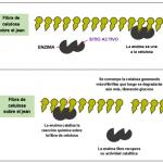 Imagen Actividad Catalitica Nota Biostoning La Biotecnología Que Esconden Los Desgastados