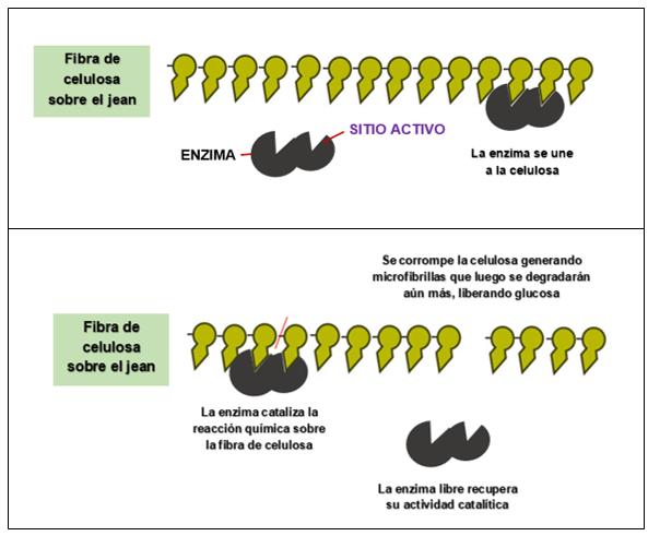 Imagen Actividad Catalitica Nota Biostoning La Biotecnología Que Esconden Los Desgastados - Jeans