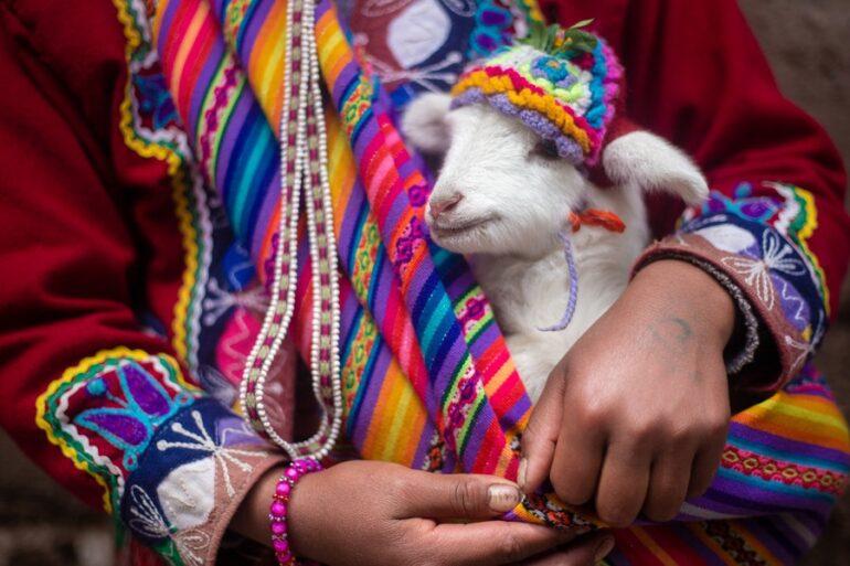 Perú Se Mantiene Como Primer Exportador En Fibra De Alpaca