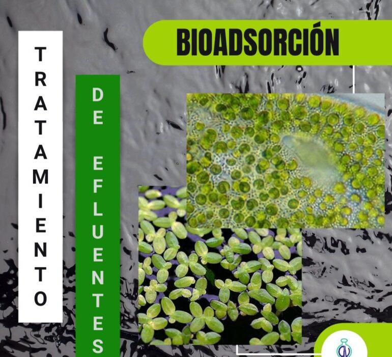 20210812 085145 Tratamiento De Efluentes En La Industria Textil: Bioadsorción - Productos Químicos Textiles